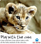 Play with the cubs